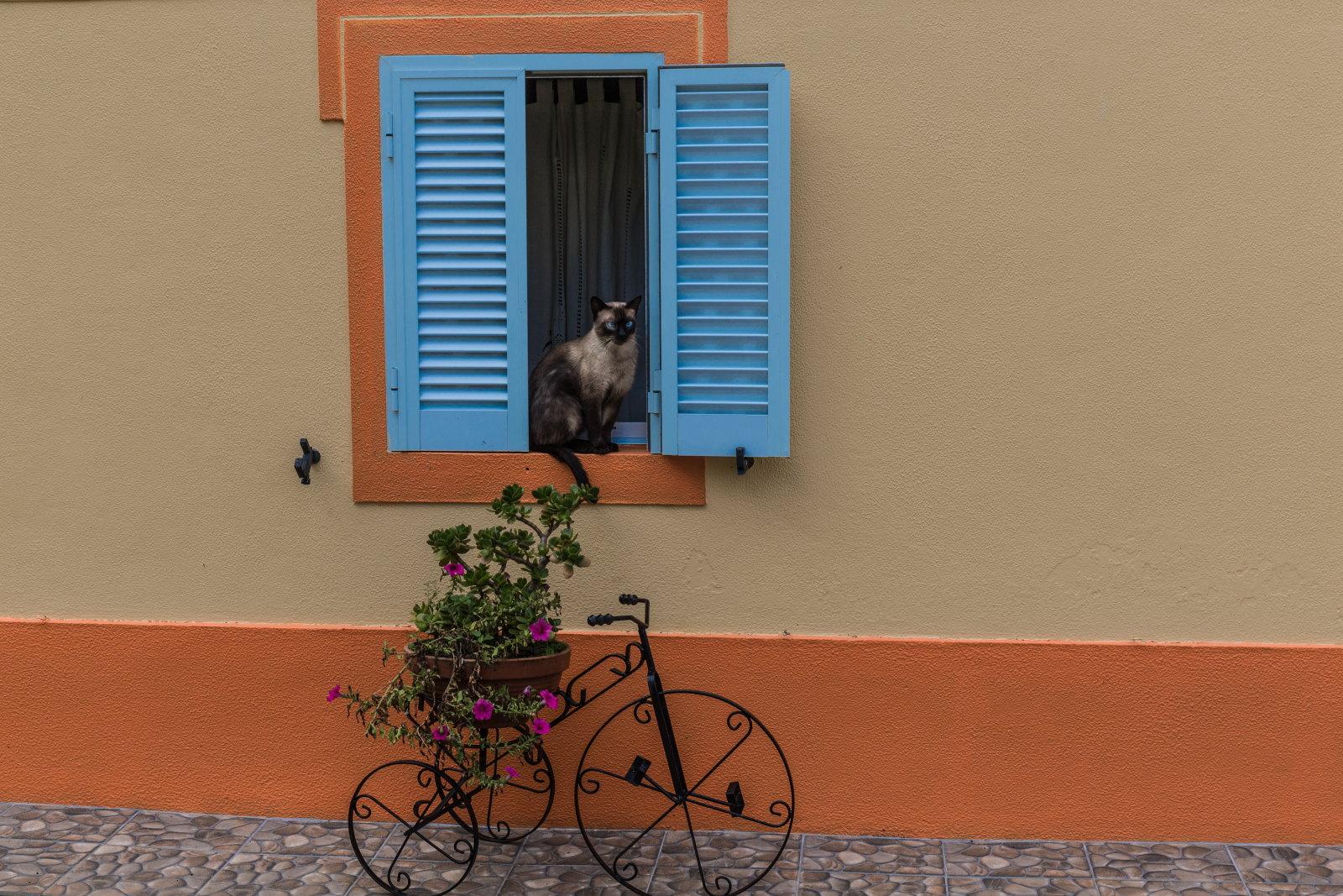 2. Platz: Karl Jäger - Katze im Fenster
